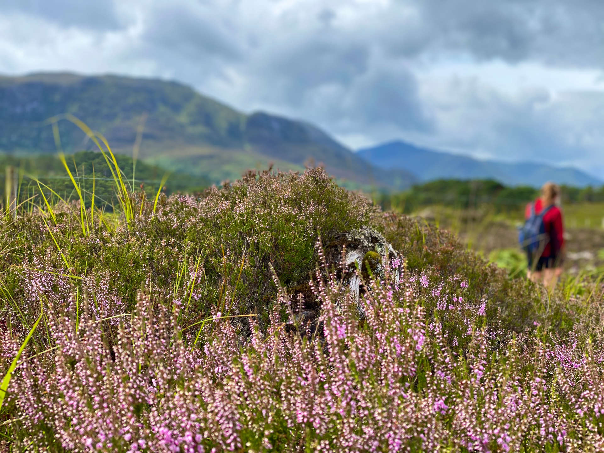 view of heather in a field